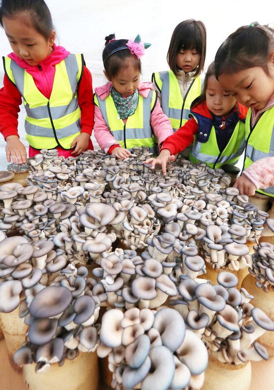 ▲ 1일 용인시청 광장에서 농업인들과 도시민이 화합하고 소통하는 '도·농 어울림 한마당 행사'가 열려 어린이들이 버섯을 만져보며 버섯의 특징에 대해 배워보고 있다. 용인=홍승남 기자 nam1432@kihoilbo.co.kr