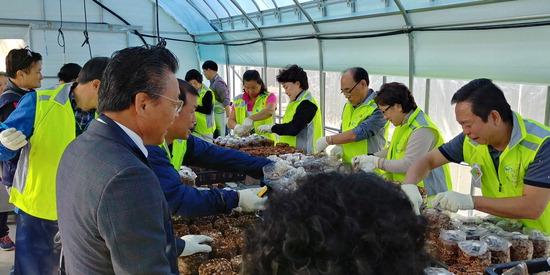 ▲ 부천 여월농업공원이 운영하는 버섯재배전문가 양성과정 현장실습 모습. <부천시 제공>