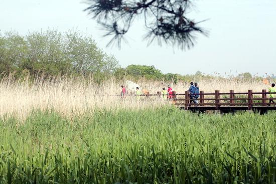 ▲ 시화호 갈대 습지 공원을 찾은 시민들이 즐거운 한때를 보내고 있다. 안산시는 보다 쾌적한 도시환경을 위해 사동&middot;고잔동&middot;대부도에 근린&middot;수변공원을 조성할 계획이다. <안산시 제공>