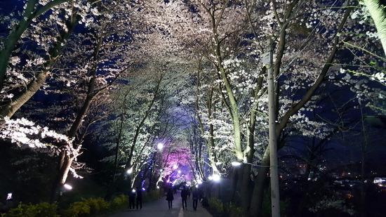 ▲ 강화군이 14일부터 고려궁지에서 북문까지 이어진 벚꽃터널을 야간에 개방한다. 사진은 야간조명과 어우러진 북문 벚꽃길을 시민들이 걷고 있는 모습. <강화군 제공>