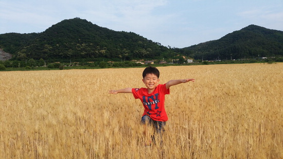 ▲ 이천시 장호원읍 청미천 황금빛 보리밭에서 한 어린이가 뛰놀고 있다.  <이천시 제공>