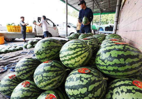 ▲ 폭염이 이어지며 수박값이 급등하고 있는 9일 오전 수원시 농수산물도매시장에서 상인들이 수박을 옮기고 있다.  /연합뉴스