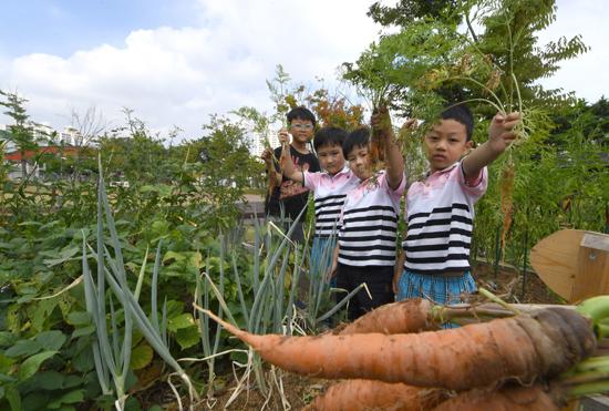 ▲ 완연한 가을 날씨를 보인 17일 수원시 팔달구 청소년문화센터 공원 시민농장에서 어린이들이 직접 수확한 당근을 들어 보이고 있다.  홍승남 기자 nam1432@kihoilbo.co.kr