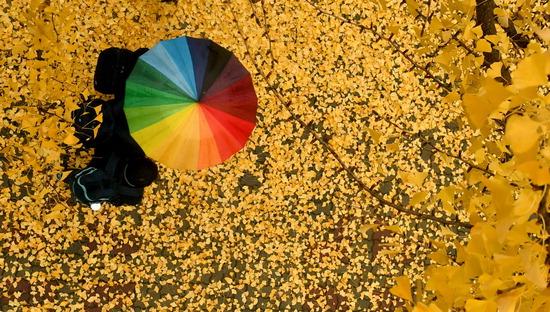 ▲ 전국적으로 미세먼지를 씻겨주는 가을비가 내린 8일 인천시 남동구의 한 거리에서 학생들이 옹기종기 우산을 쓰고 발걸음을 재촉하고 있다.  이진우 기자 ljw@kihoilbo.co.kr