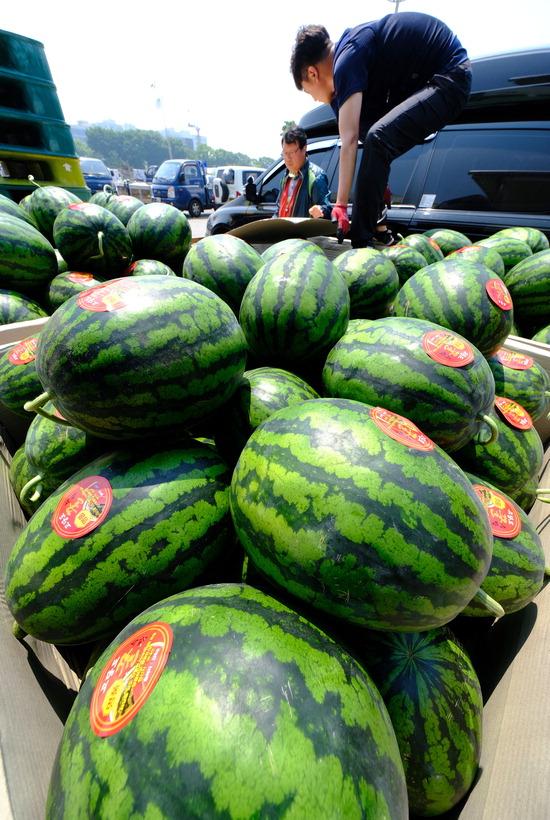 ▲ 때 이른 여름 더위가 찾아오면서 여름 상품 매출이 급증하는 가운데 23일 인천시 남동구 구월농산물도매시장에서 상인들이 집하된 수박을 정리하고 있다.  이진우 기자 ljw@kihoilbo.co.kr