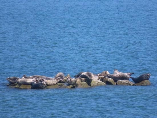 ▲ 백령도 하늬바다 물범 인공쉼터에서 점박이물범들이 휴식을 취하고 있다.<br /><br />