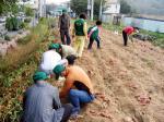 의정부 가능3동, 불우이웃돕기 고구마밭 개간사업 실시