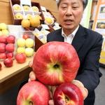 농진청, 중간크기 사과·배 보급