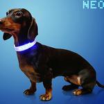 '펫밴드'로 전 세계 강아지 하나로 잇는 꿈꿔요