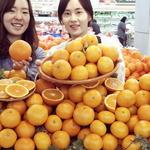 국산 오렌지 '청견' 맛도 일품