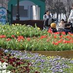성큼 다가온 봄