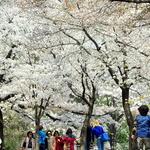 봄… 봄… 봄에 빠져들다