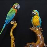 사진으로만 보던 세계 희귀새들 의왕 조류생태과학관서 만나요
