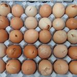 달걀 사기 무더기 적발… 달걀 사기 겁나네요