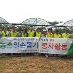 농협 직원들, 가뭄 피해 겪는 옹진군서 농촌 일손돕기 한창