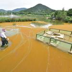 '황토색'으로 변한 인천대공원 호수… 폭우로 유입된 '흙' 원인