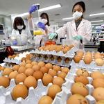 경기도내 농장 살충제 달걀 추가 확인 전 농가로 점검 확대… 불안 진화