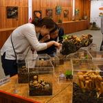 국립수목원 '구별하기 어려운 우리 주변 독버섯' 전시회 열어