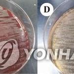 녹농균, '뒤집기는 어려울듯'… '경로'와 무관하게 받을 '가중'