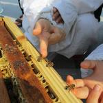 어린이는 오감만족 자연학습 어르신은 기초튼튼 귀농체험 도심 속 꿀벌의 매력에 '풍덩'