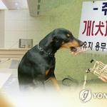 광주경찰서, 개가 집주인과 아들 물어 경찰관에 사살