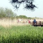 안산시, 대부도 등 3곳에 근린·수변공원 조성