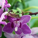 '봄의 전령사' 꽃과 개구리