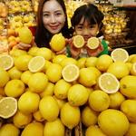 먹기 편한 '씨 없는 레몬'