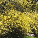 노랗게 물들어 가는 봄