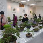 여주 농기센터 자생식물연구회 우리꽃 아름다움 한껏 피웠네~