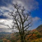 1100년 된 용문사 은행나무 지역 '명품 숲'으로 재탄생