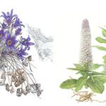 꽃잎 하나하나 섬세한 붓터치 '그림 속 세계 식물' 만나볼까