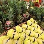 필리핀산 열대과일 맛 보세요
