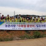 인천농협 충남 보령 양파농가에 '품앗이 인력 지원'