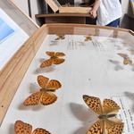 나비의 한살이 관찰할 기회