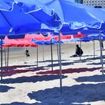 사람도 가축도 못버텨 '재난 수준'… 도내 닷새 만에 6곳 정전
