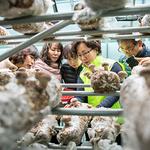부천여월농업공원, 버섯재배전문가 양성과정 선착순 모집