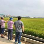 '평택 슈퍼오닝쌀' 혼종·병충 가려내 최고품질만 생산