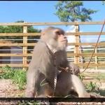 북한산 원숭이, 몸짓에 화들짝 놀래, 호랑이에 악어 캥거루도