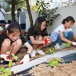 의정부 1동 어린이자치위, 주민센터 앞 텃밭 김장 배추 모종 심기 행사