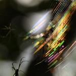 거미줄에 걸린 오색빛깔
