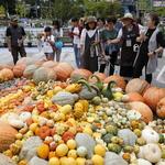 전문가~시민 '도시농업 콘텐츠' 깊은 관심