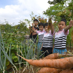 아이들이 직접 수확한 당근