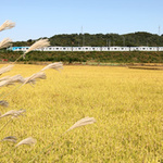 공항철도 추석연휴 특별수송대책 마련… 막차 구간 + 시간 연장