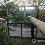 보문산 일원 주민 외출 자제, 철창 뚫는 괴력 있나 , 베이징동물원 참사도