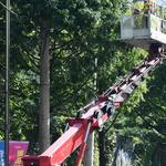 수원시, 수원화성문화제 앞두고 가로수·교통시설물 점검