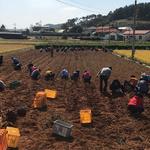 인천 부평구 시설관리공단, 노사 화합 위한 농촌 일손돕기 봉사 나서