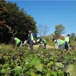 농협은행 IT금융부 임ㆍ직원, 농촌일손돕기 봉사활동 펼쳐