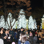 성남 '복정동 어울림 빛축제' 28일 점등…연말까지 빛의 향연