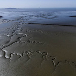 대부도 갯벌, 경기 최초로 '람사르 습지' 이름 올렸다